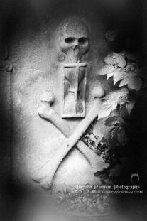 Memento Mori Skull Under Tree