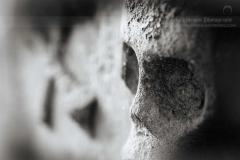 Profile Memento Mori Skull