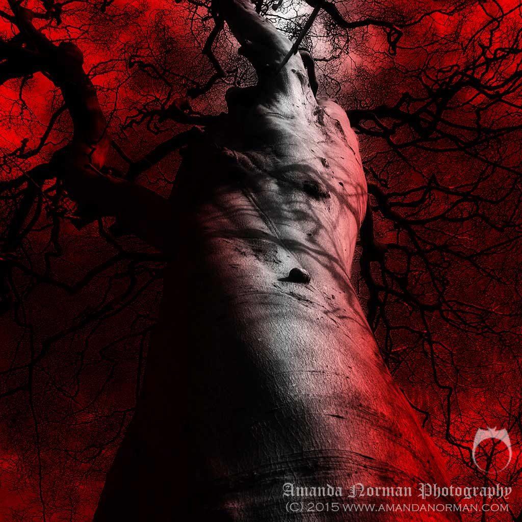 Tree of Souls Heysham